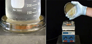 An image of a beaker, and an image of a hand holding a dish over a piece of lab equipment.